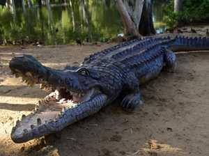 Peeing tourist's arm bitten off by croc