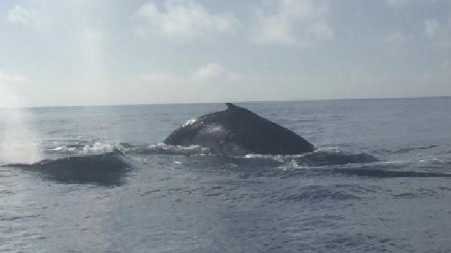 Joe Martin spotted a pod of whales while out fishing near Cape Cleveland Light on Thursday afternoon.