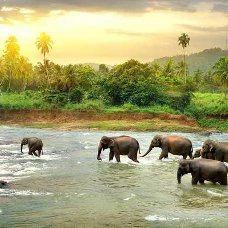 Aussie interest in Sri Lanka is booming.