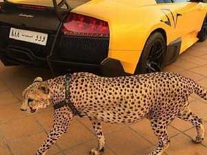 Rich kids of Saudi