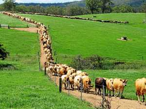 Funding boost to support dairy farmers