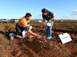 Chemicals beat organics in sweet potato pest trial