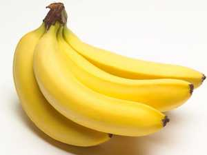 Panama TR4 outbreak feared at Qld banana farm