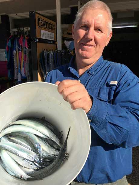 Jon Cara caught several good gar in the lower Mooloolah River on fresh prawn on Sunday.