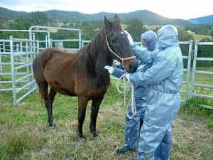 Horse owners urged to vaccinate after Hendra Virus case