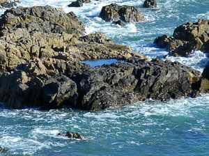 Mermaids at Slade Point
