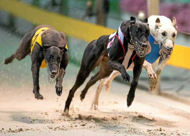 Grafton Greyhound Racing Club are excited to announce they will host an increased number of meetings for the 2017/18 season.