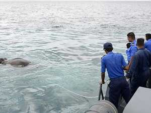 Elephant rescued after being found 16km out to sea