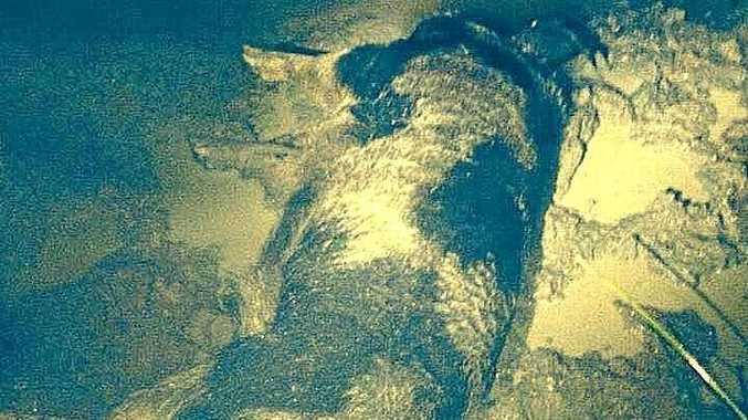 FILE PHOTO: A wild boar.