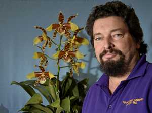 Toowoomba's champion orchid grower crowned at show