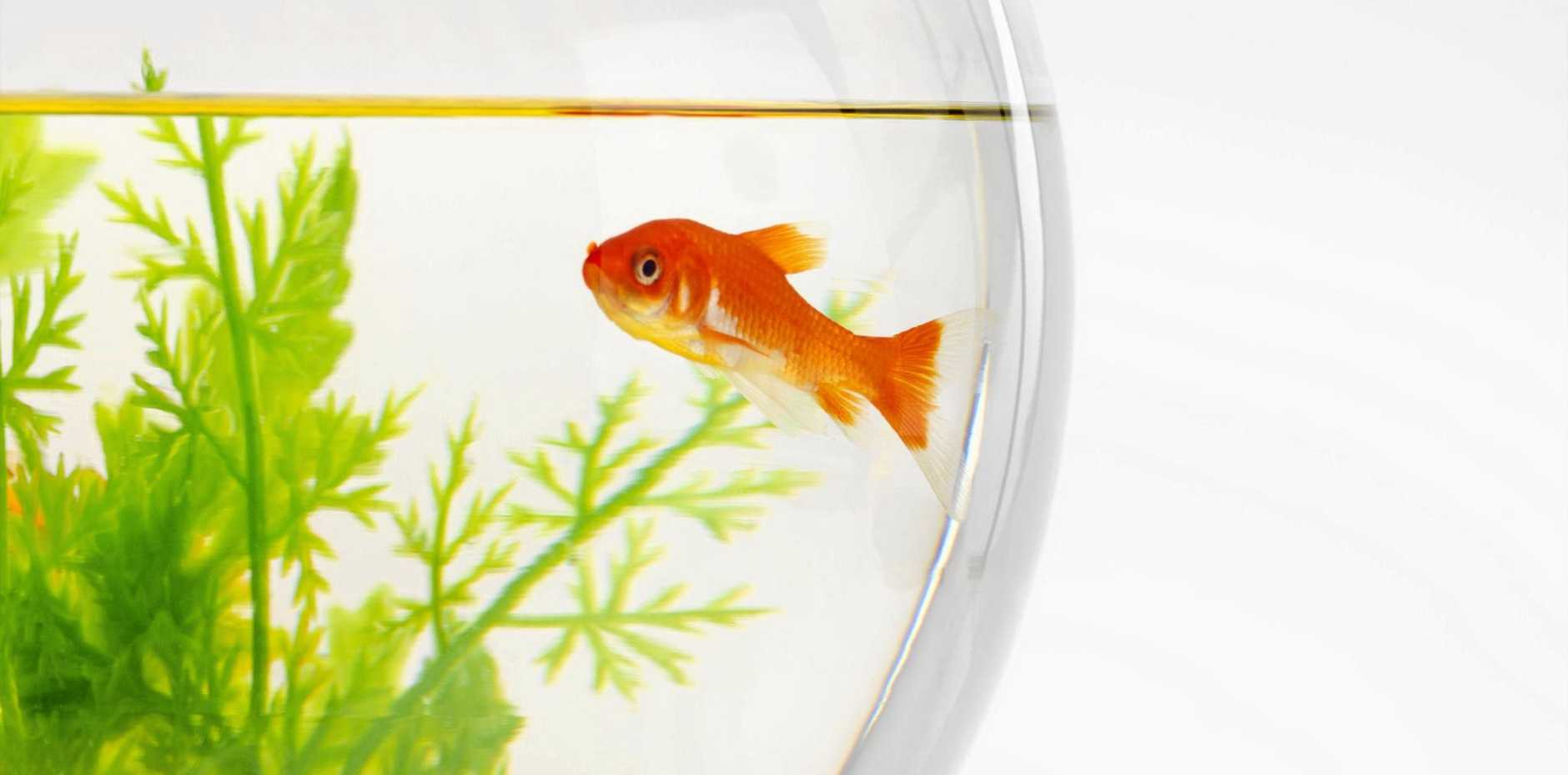 The time spent cleaning a fish bowl sparked the disturbing incident.