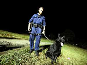 Astro sniffs out crime in Byron Bay