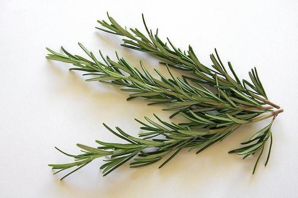 Rosemary is one of the main ingredients in the chemical free air freshener.