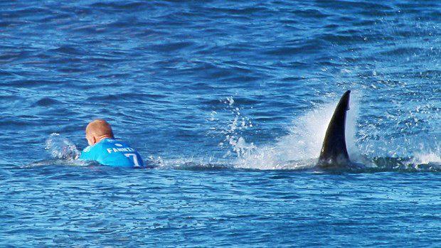 A large shark attacks Mick Fanning.  Photo: Screengrab WSL