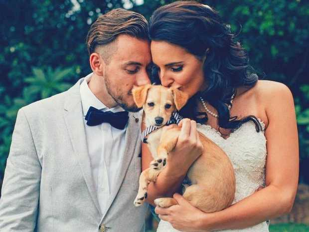 PET FRIENDLY WEDDING PLANNING: Having your fur babies at your wedding isn't just for celebrities.
