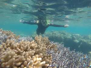 Great Barrier Reef: new pics show what it's really like