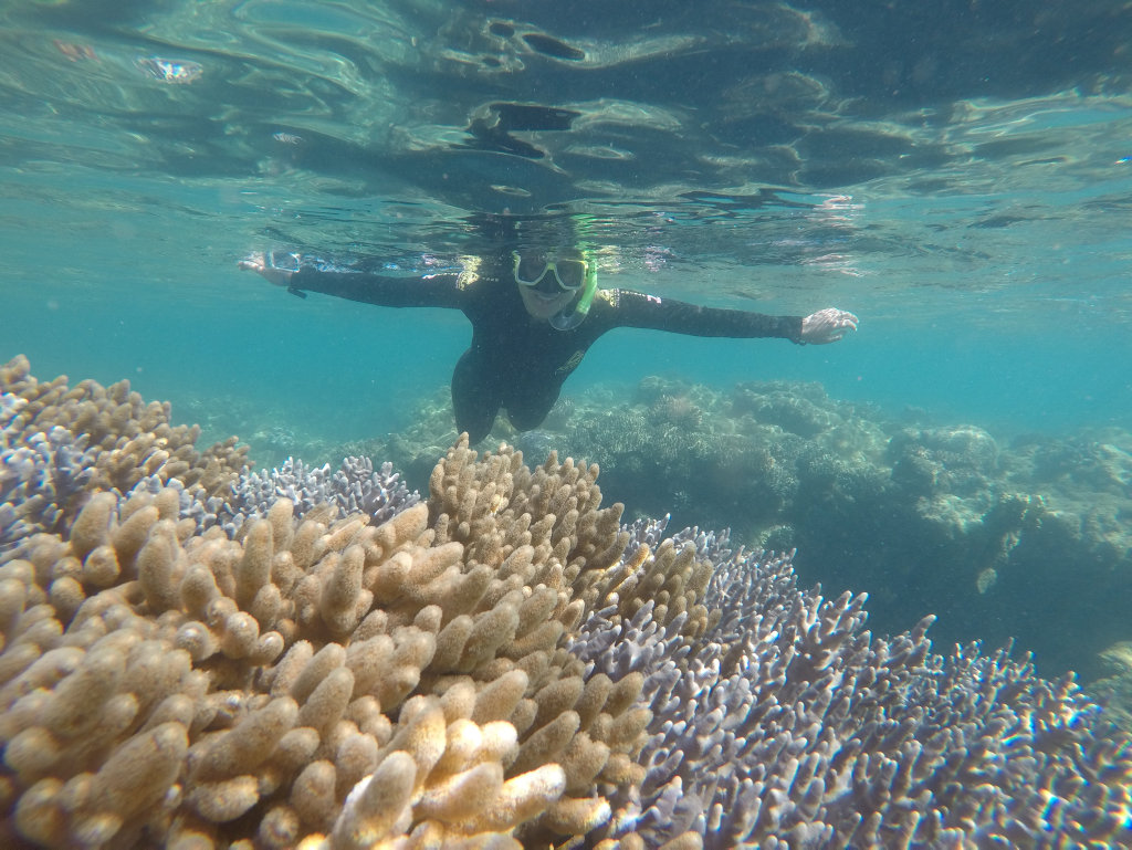 FULL OF LIFE: A visitor with red Cat Adventures enjoying a positive reef expreience post TC Debbie.