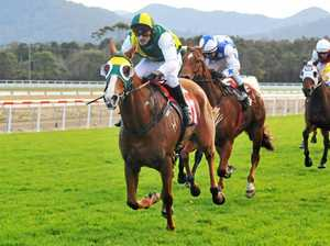 SINGLE MISSION: The Sawtell Cup has been the doamin of Taree-based galloper Single Spirit in recent years.