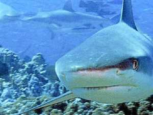 Shark Week episode looks to our shores