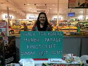 Kings Forest koala walk planned for this weekend