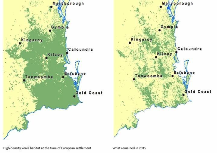 WWF-Australia has produced a map based on Queensland Government habitat mapping, that shows the destruction and breakup of koala habitat in Queensland from historic and ongoing tree clearing.
