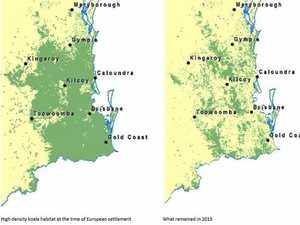 Map shows grim fate for Coast's koalas