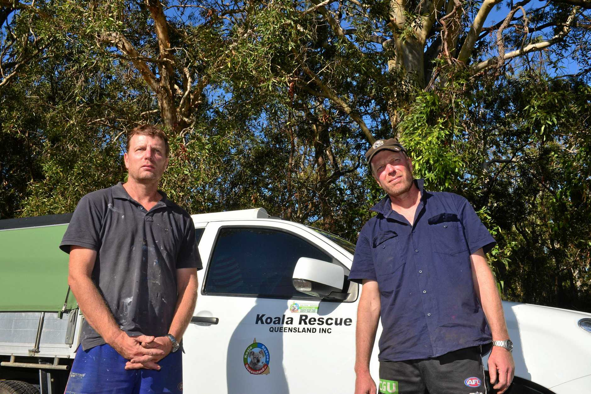 Ray and Murray Chambers run Koala Rescue Queensland from Moffat Beach.