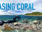 Rockhampton's premiere screening of the award-winning documentary Chasing Coral which will change the way you look at climate change and the Great Barrier Reef
