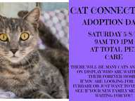 Cat Connections HQ are holding an Adoption Day. Come and meet our Cats and Kittens who are waiting for their forever homes.