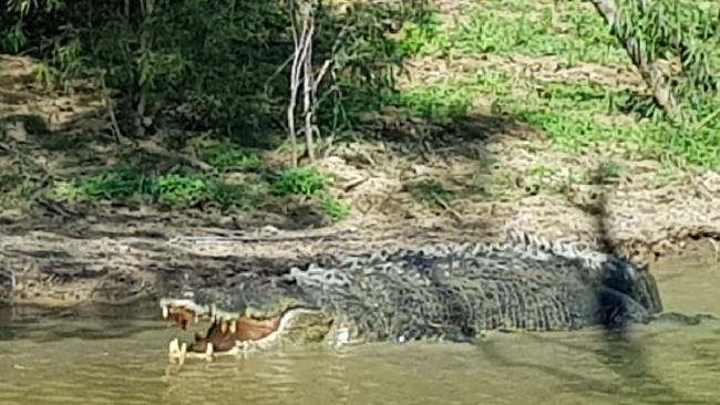 A Gold Coast couple were impressed by this 5m croc they saw while fishing on the Mary River. Picture: KELLY MCCANN