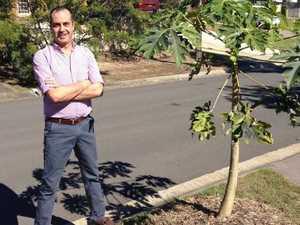 Paw paw trees on verge spark $6300 fine threat