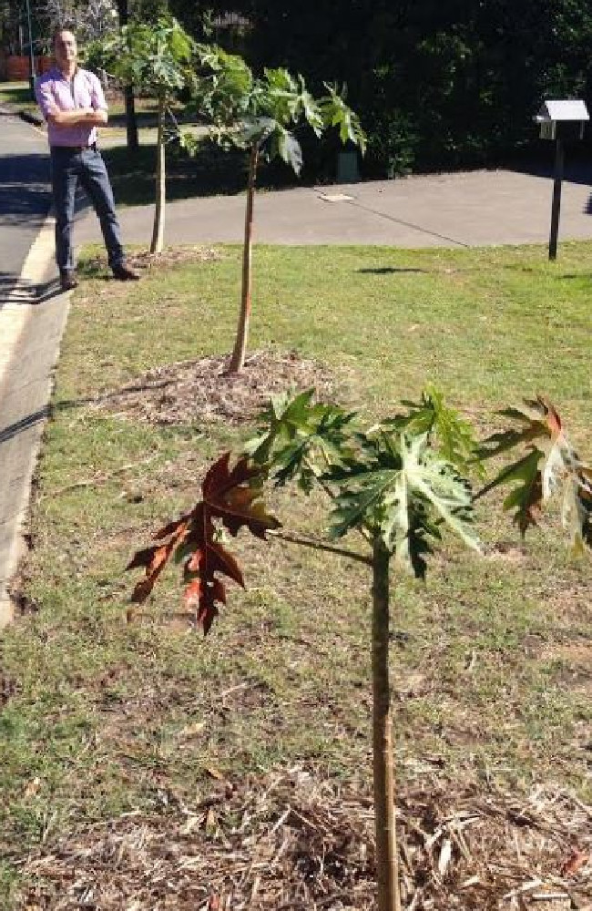Brisbane City Council has given Darren Montesin until August 12 to remove the trees or face a fine. Picture: Darren Cartwright