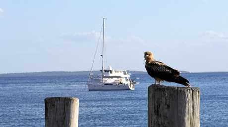 There are hundreds of bird species on Fraser island.