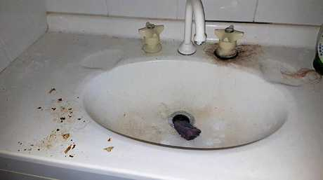 DISGUSTING: Mess left by evicted tenants. Owner of the Mongogarie property Christine Beatty has been left at least $5000 out of pocket.