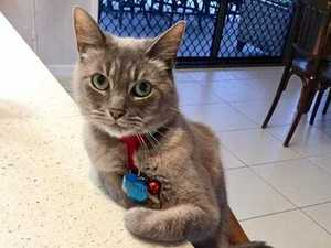 Cutest cats of the Sunshine Coast revealed