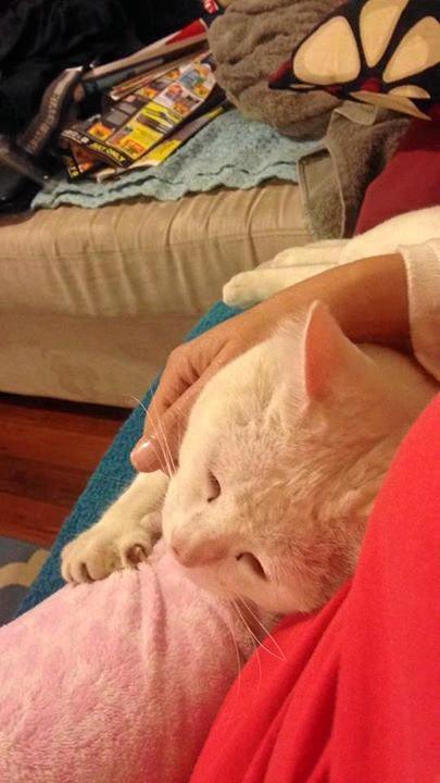 CATS OF THE COAST: Casper loves a cuddle.