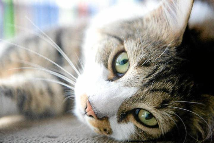 CATS OF THE COAST: Frankie loves eating... don't we all.
