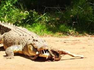 Sunshine Coast group's monster croc encounter