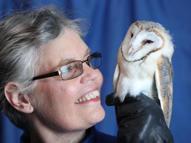 Bev Langley of the Animal Rescue Centre in SA with one of the barn owls. Picture: Tait Schmaal