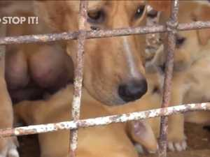 Dogs slaughtered for meat: Antonio urged to condemn it