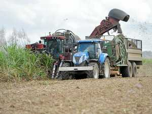Cane growers react to first few weeks of crush