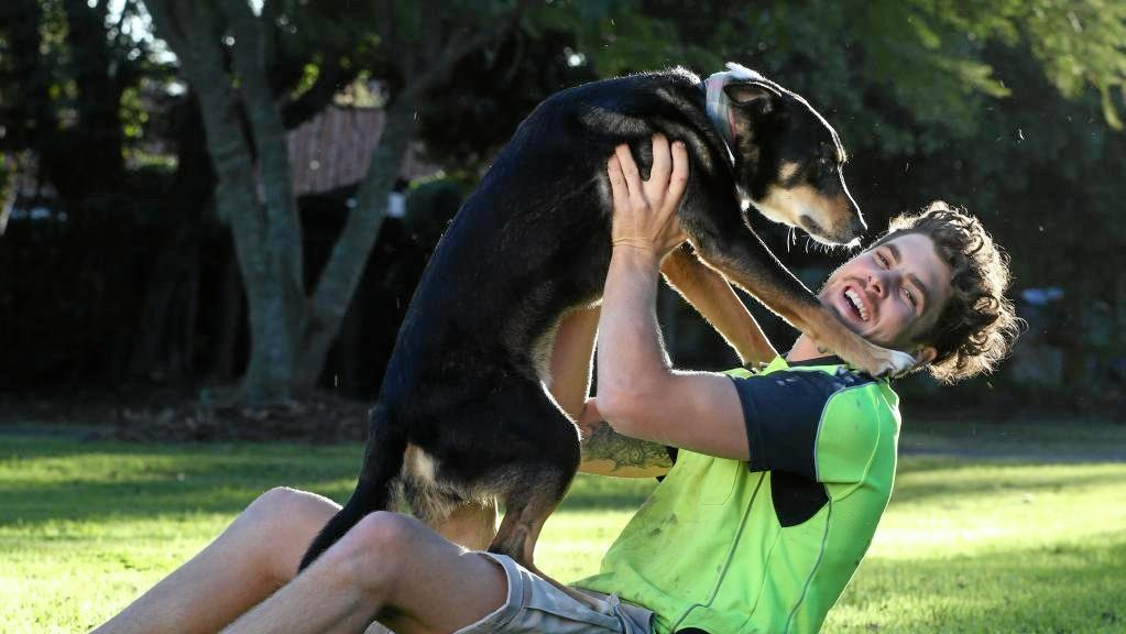 Serj the kelpie is back home in Gumdale with owner Trent O'Brien after going missing and ending up in Bundaberg.