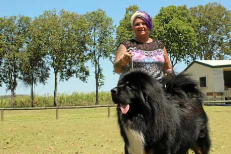 A rare Tibetan Mastiff took out best runner up in show with owner Lou Kelly from Sarina.