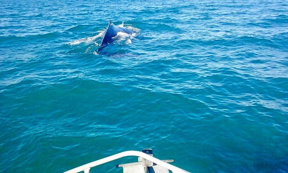 HUMPBACK: Josh Carter posted this photo of the humpback whale on Facebook after spotting it in the Burnett River.