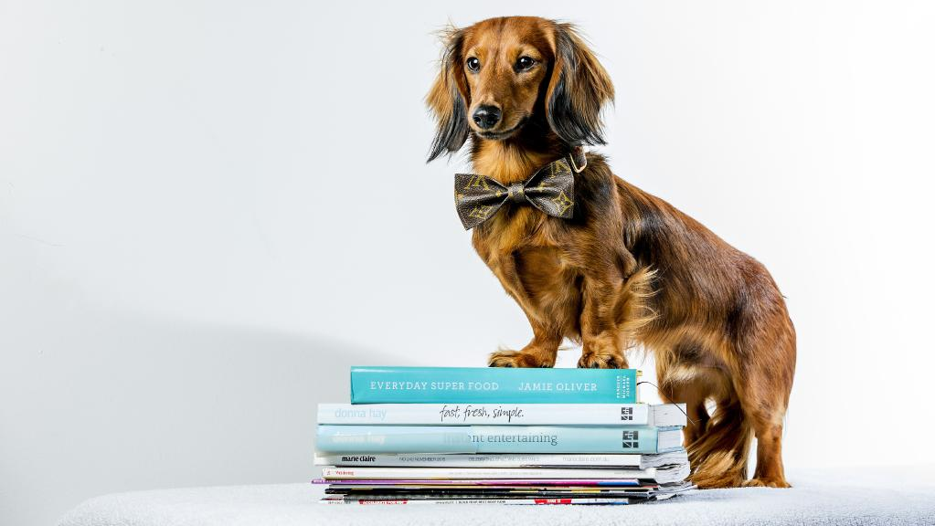 Instagram famous dachshund King Kingsley will soon launch a coffee-table book and is looking for some four-legged talent to feature in its pages.