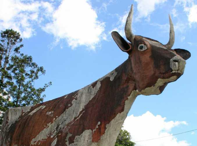 The Big Cow at Kulangoor.