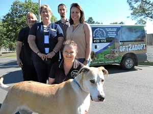 Animal refuge's new van design is creating high impact
