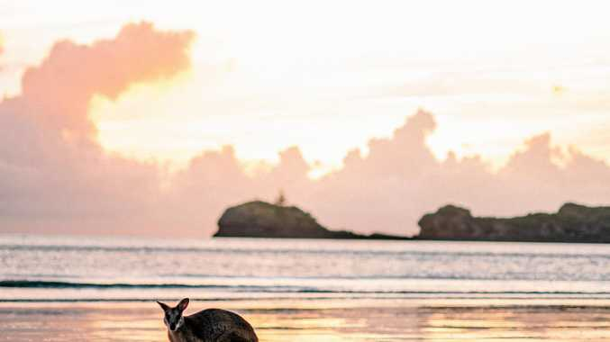 WAKE UP HERE: Cape Hillsborough is considered one of the best places in the world.