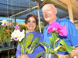 Couple spring to action with orchid obsession
