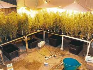 Nah these are all for me: Man busted with 90 marijuana plants